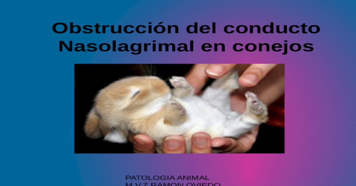 Obstrucción del conducto Nasolagrimal en conejos - [PPTX Powerpoint]