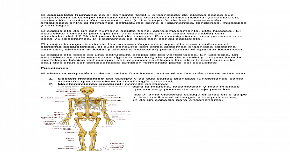 Sistema oseo - [DOC Document]