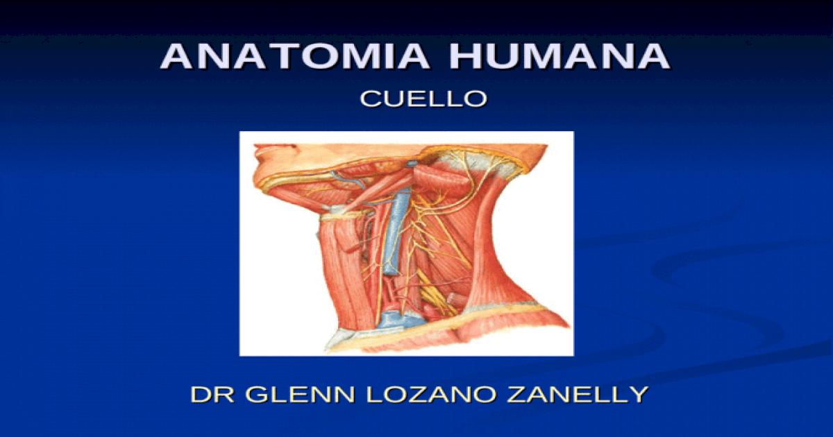 Anatomia cuello - [PPT Powerpoint]
