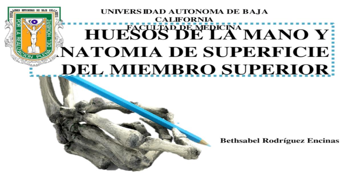 Huesos de la mano y anatomia de superficie del miembro superior ...