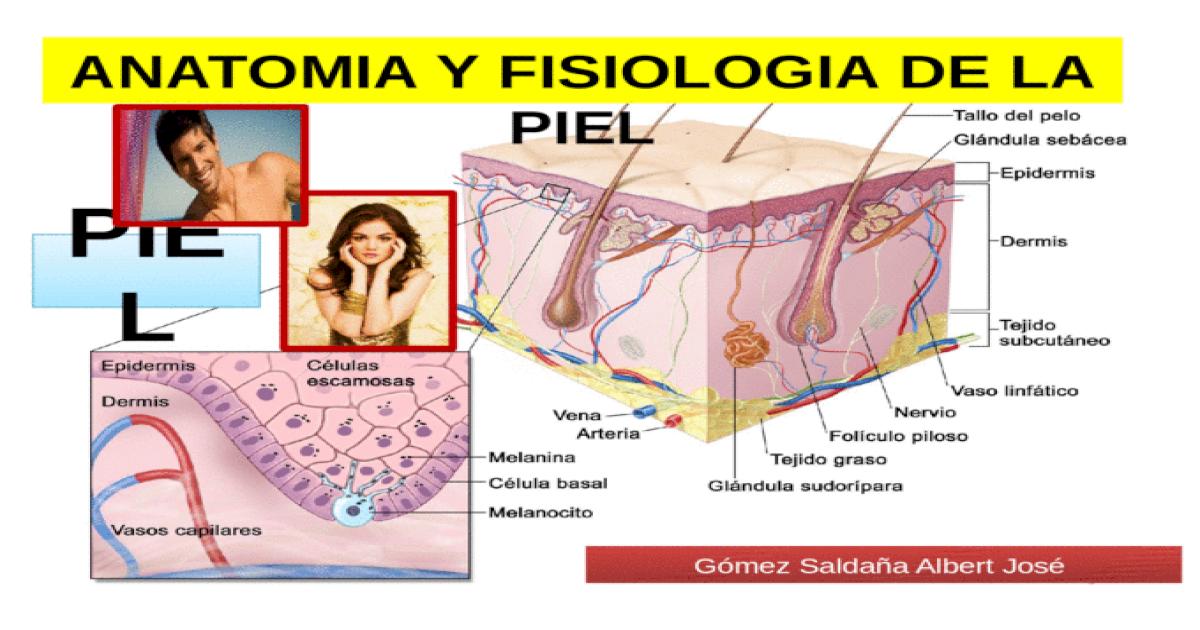 Anatomia y fisiologia de la piel - [PPTX Powerpoint]