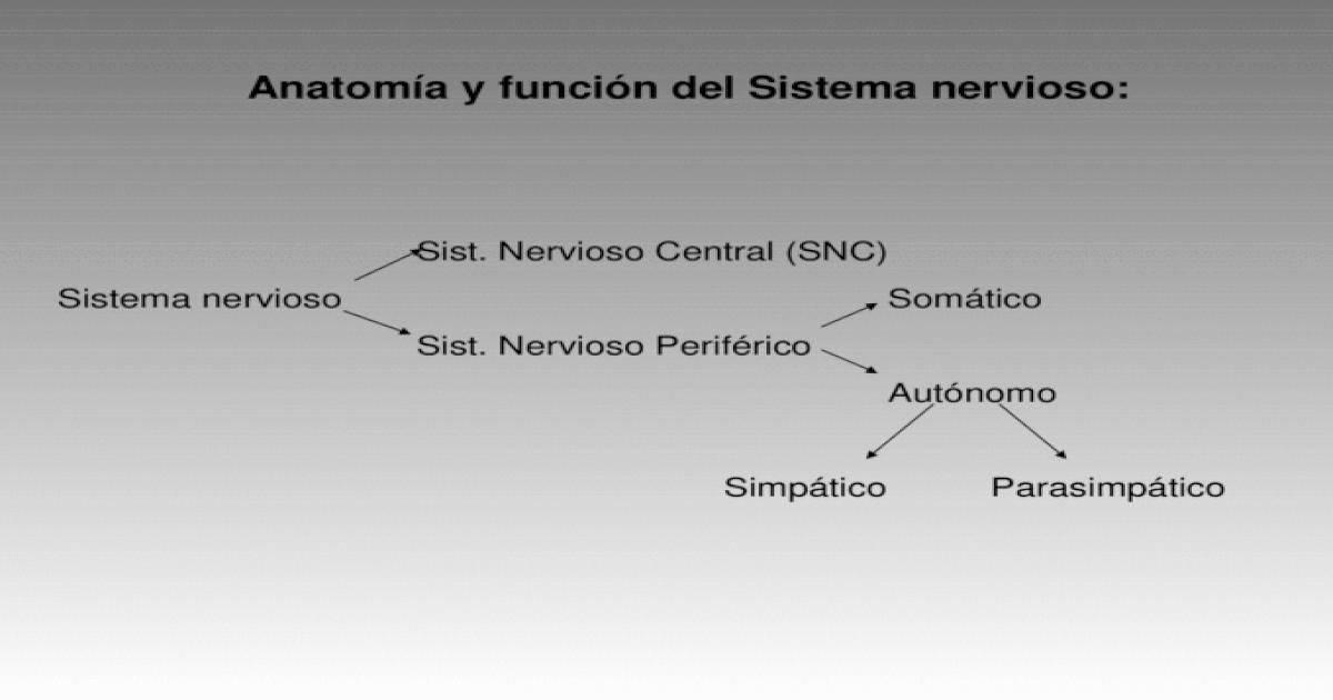 Anatomía y función del Sistema nervioso: Sist. Nervioso Central (SNC ...