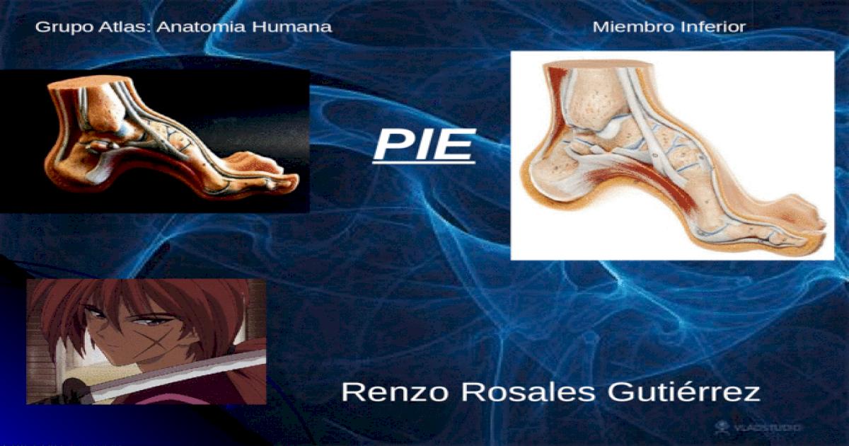 Anatomia Grupo Atlas Clase 5 Pie - [PPTX Powerpoint]