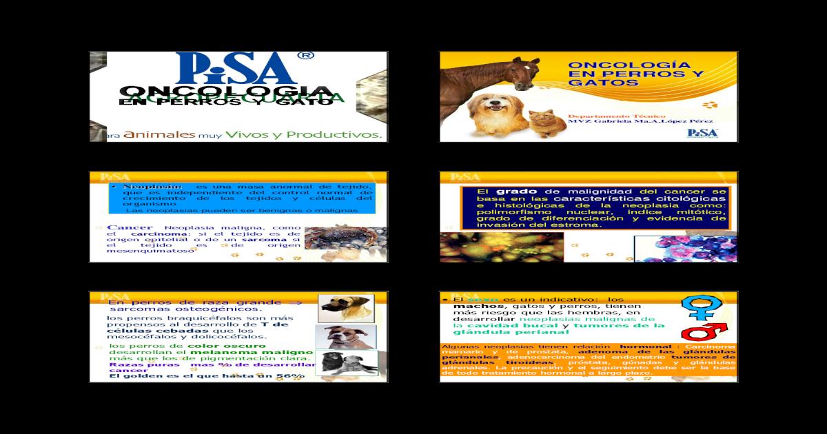 adenoma de próstata en perros y