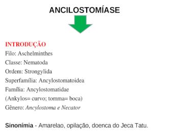 filo aschelminthes